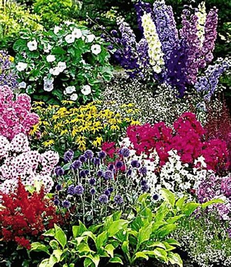 Pflanzen Kaufen by Buntes Staudenbeet Multi Colour Top Pflanzen