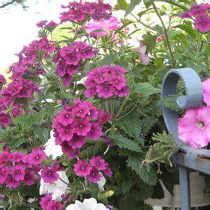 Heat Tolerant Flowers For Planters by Heat Tolerant Summer Plants Garden Landscaping