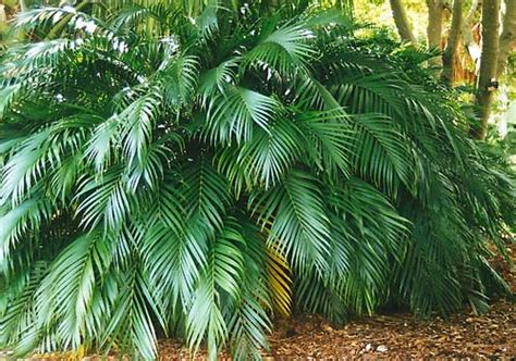 Palm Detox by These Plants Can Detox Your Home From Carcinogenic Toxins