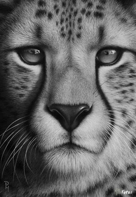 drawn animal detailed drawing pencil   color drawn