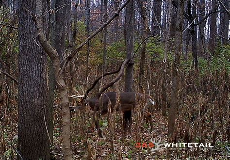how to find deer bedding areas hunting late season staging areas 365 whitetail