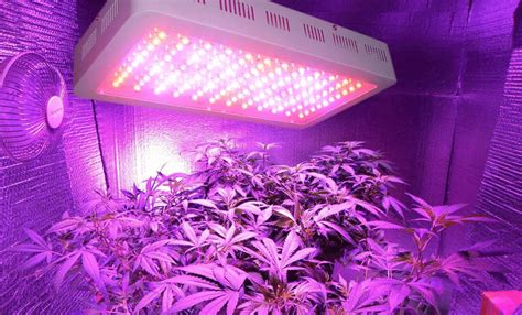what are the best led grow lights best led grow lights reviews 2018 top 10 spectrum