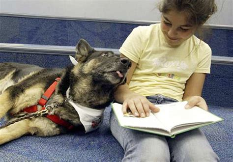 reading to dogs webclawer dogs help learn to read yahoo shuts yahoo pets l a unleashed