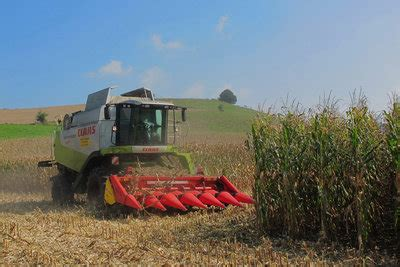 Quot Wann Ist Maisernte Quot So Genie 223 En Sie Das Getreide Saisonal