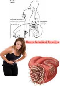 human intestinal parasites intestinal parasites can be