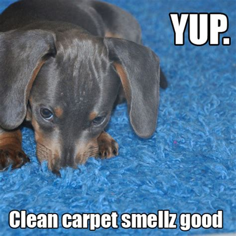Carpet Cleaning Meme - cleaning humor carpet cleaning professional page 2