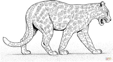 realistic jaguar coloring pages simple of a jaguar coloring pages