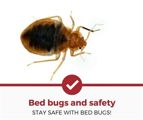 bugs in bed not bed bugs bugs in bed not bed bugs 28 images bed bug prevention