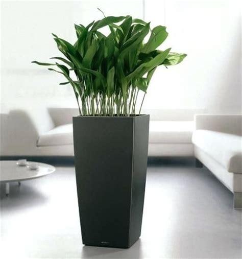 bright  modern decorative indoor flower pots plant