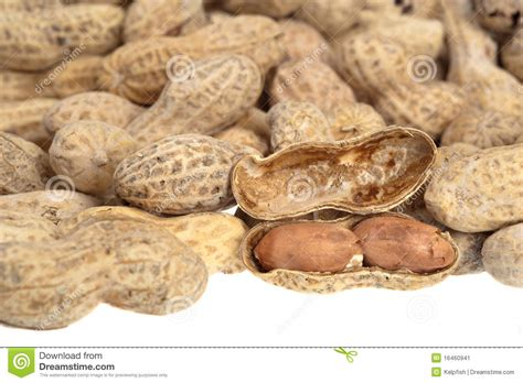 shelled peanuts stock image image 16460941