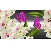 Orchids Butterflies Bright HD Desktop Wallpaper