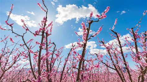 fiore simbolo di speranza esta primavera ser 225 peor que la anterior para los