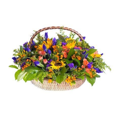 girasoli fiori girasoli