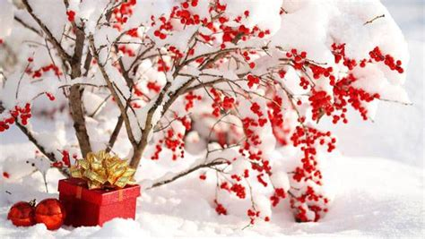 christmas decorations with berries how to use plants in your decorations mnn nature network