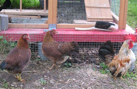 Laufenten Und H Hner 4504 by Zwergh 252 Hner Tiere In Unserem Gartentiere In Unserem Garten