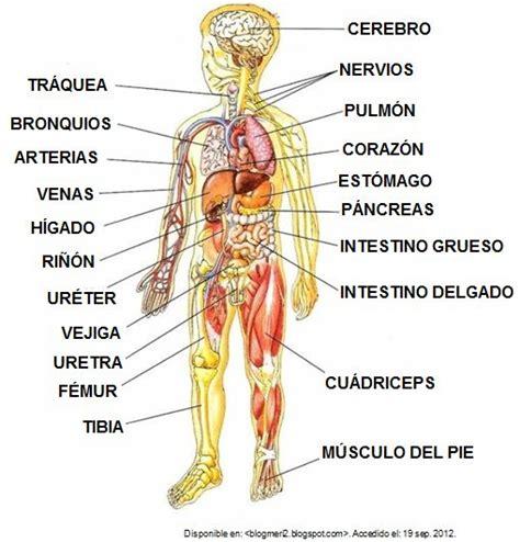 imagenes reales de organos del cuerpo humano engine cutaway diagram honda engine diagram wiring diagram