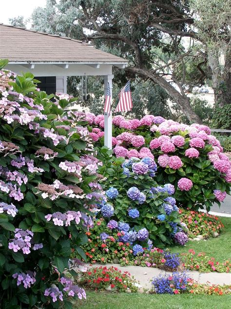 flowering shrub for shade flowering shrubs for shade gardens hgtv