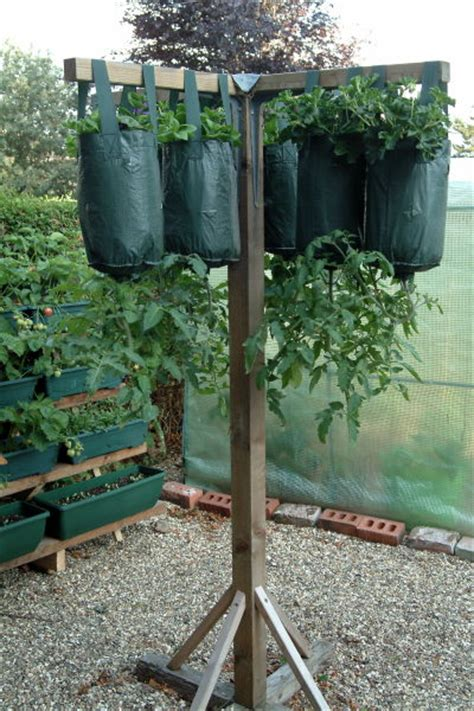 Diy Hanging Tomato Planter by How To Care For Hanging Tomato Plants Space Saving Veggie Gardens Gardens