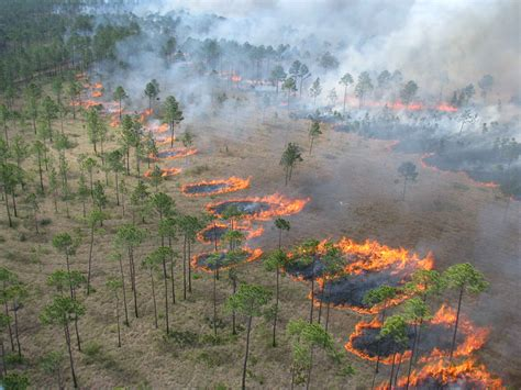 picture aerial ignition interior high rates spread open savannas