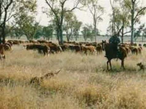 australian cattle cowboys ringer from the top end australian cowboy youtube
