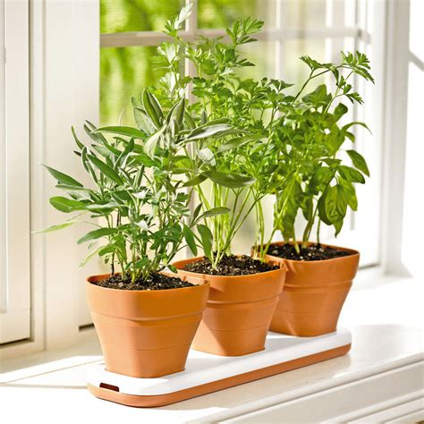 Windowsill Pots For Herbs Windowsill Herb Garden Pots Adjust To Three Heights The