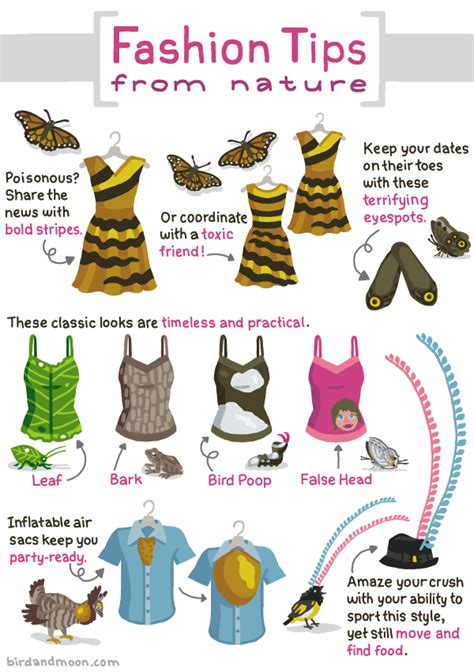 wardrobe tips fashion tips from caterpillars butterflies birds and