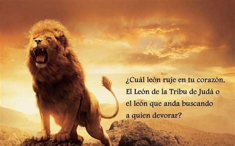 imagenes de leones con frases de amor el le 243 n de la tribu de juda frases cristianas