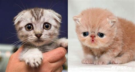 imagenes de animales llorando gatos tristes related keywords suggestions gatos