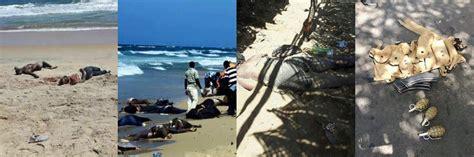 consolato della costa d avorio a costa d avorio spari in resort quot almeno 16 morti 4 europei quot