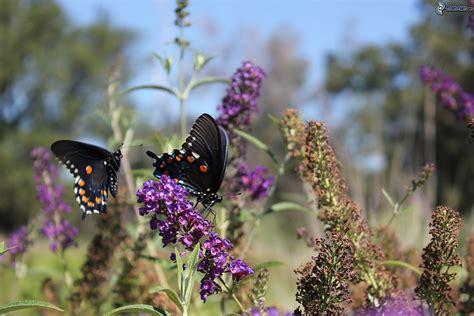 ricerca sui fiori farfalle sui fiori