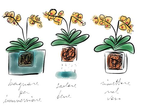quanto bagnare le orchidee prendersi cura delle orchidee fioreria d assi 233