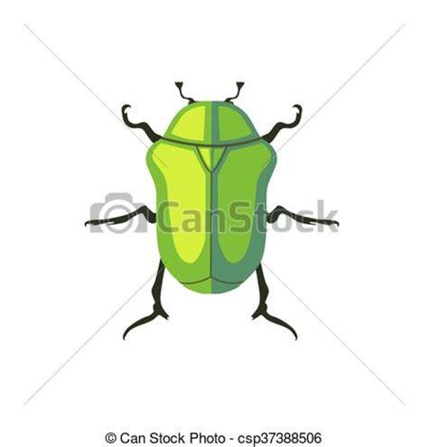 insetti appartamento appartamento maggio protaetia insetto disegno insetto