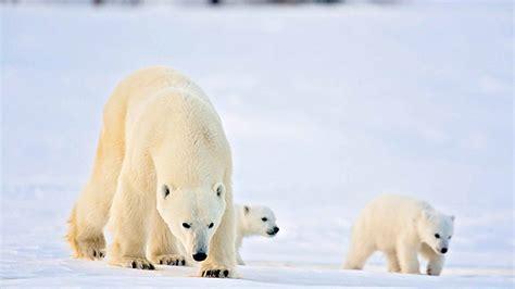 polar and polar safari holidays world safaris