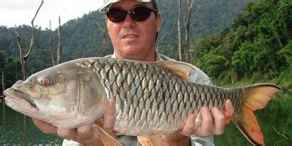 umpan jitu mancing ikan palung teknik jitu mancing ikan