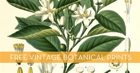 Ikea Dorm Free Download Vintage Botanical Printables Curbly