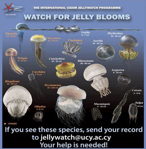 Jelly All Type researchers asking to spot a jellyfish cyprus mail
