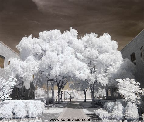 infrared color infrared photography false color tutorial kolari vision