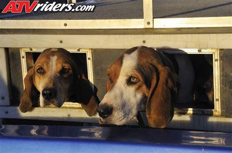 dogs used to hunt bears black in west virginia with atv utvs gncc atv racer brent sturdivant