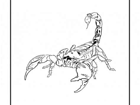 scorpion king coloring page scorpion coloring page animals town color printable desert