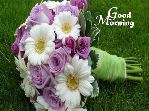 wallpaper flower morning white and pink flowers photos of good morning festival