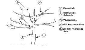 Baumkrone Schneiden Kosten by Dorfgemeinschaft Dipshorn