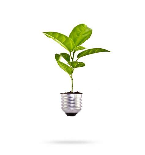 Culture Des Plantes by Culture Des Plantes Dans Une Oule T 233 L 233 Charger Des