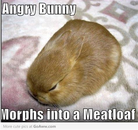 Angry Bunny Meme - cute pictures archive page 453 goaww com animal