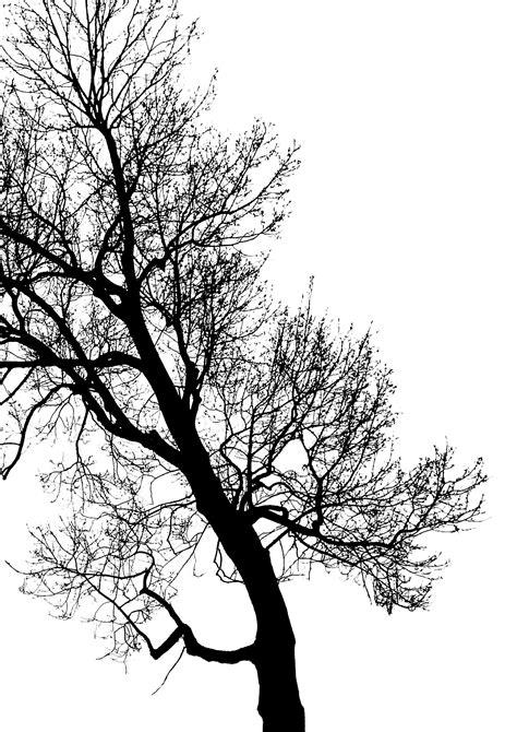 imagenes invierno blanco y negro fotos gratis 225 rbol bosque rama silueta invierno en