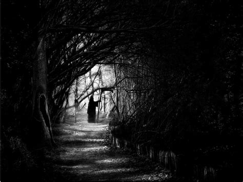 dark forest night image1 jpg dark forest night dark forest night image 31000 jpg