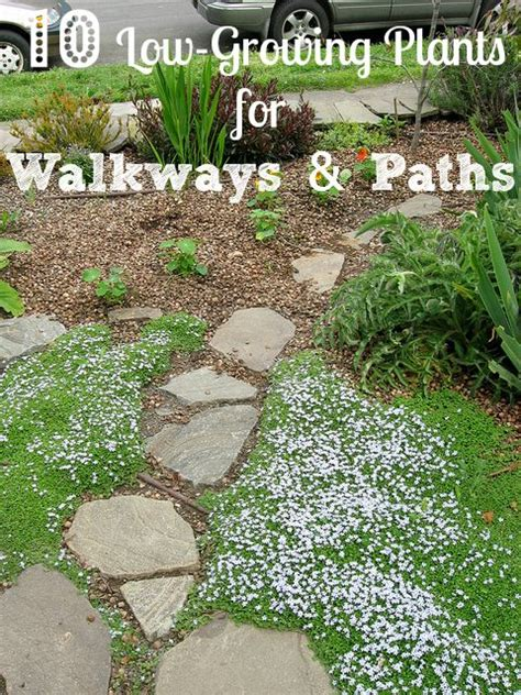 growing plants     garden walkways