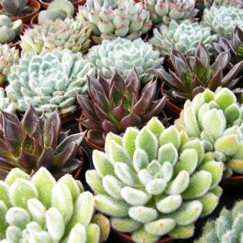 plantes de bureau sans soleil plantes de bureau sans soleil cheap luhibiscus nuest pas