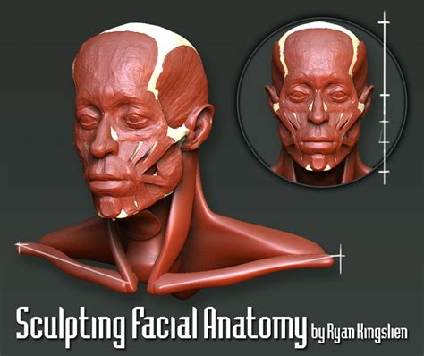 zbrush qremesher tutorial zbrush info zbrush video of the week anatomy with ryan