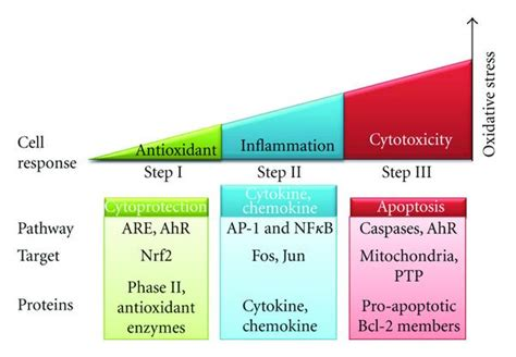 Cellar Antioxidant Defense And Detoxication System In The by Health And Cellular Impacts Of Air Pollutants From