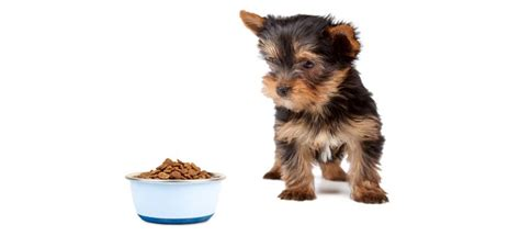 looking for a yorkie 5 best food for yorkies review guide 2018